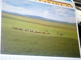 MONGOLIA MONGOL PRAIRIE  PRATERIA MONGOLA E CAVALLI HORSES   N2007  HJ3477 - Mongolia