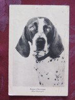 France 1960 Postcard Dog Braque To France - Cani
