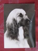 France 1971 Postcard Dog Lyon To Switzerland - Car Slogan - Marianne - Cani
