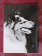France 1971 Postcard Dog Lyon To Switzerland - Marianne - Car Slogan - Cani