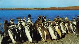 Argentinië Punta Tombo  Pcia Del Chubut Pingüinera En Punta Tombo Pingiun Grafica S.A.    Barry 4586 - Argentine