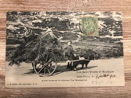 CARTE POSTALE ANCIENNE SAINT PIERRE ET MIQUELON - AUTRE ATTELAGE SAINT PIERRAIS - Saint-Pierre-et-Miquelon