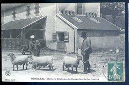 Cpa Du 45  Nibelle  Béliers Etalons Du Domaine De La Guette    DEC19-33 - Autres Communes