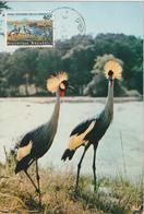 Rwanda Carte Maximum Oiseaux 1965 Grues 101 - Autres