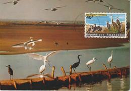 Rwanda Carte Maximum Oiseaux 1965 Cormoran 106 - Autres