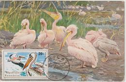 Rwanda Carte Maximum Oiseaux 1975 Pélican 635 - Autres