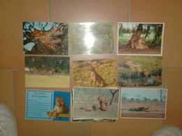 CAB0094 Animaux Lot De 27 Cartes Vierges : Felin LION - 5 - 99 Postcards