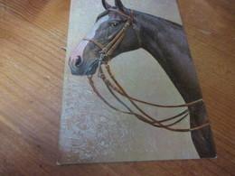 Fantasiekaart Paarden - Caballos