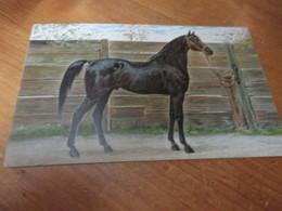 Fantasiekaart Paarden - Chevaux