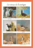 A677 / 653  Oiseau De La Montagne Multivues - Animaux & Faune