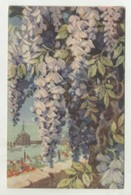 Madeira Flowers, Painted By Max Romër  (2 Scans) - Madeira