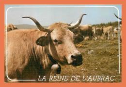 A659 / 195  Vache La Reine De L'Aubrac - Animaux & Faune