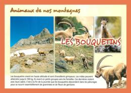A682 / 167 Les Bouquetins Multivues - Animaux & Faune