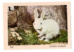 SPAIN ? Nº 105 ANTIGUO CROMO OLD COLLECTIBLE CARD RABBIT LAPIN LIÈVRE HARE CONEJO COMÚN HASE LIEBRE...FAUNA FAUNE....VER - Cromos