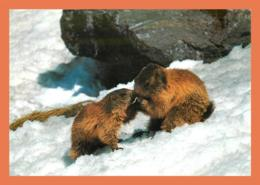 A691 / 087 Marmotte - Animaux & Faune