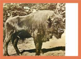 A157/401 Bison D' Europe - Zonder Classificatie