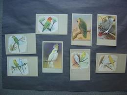 Lot De 10 Cartes Postales - Illustrations Oiseaux - Vogels - Birds - Oiseaux