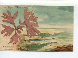 Algues Marines Halyménia - Otros