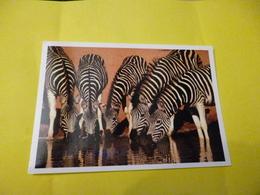 5 Zebres Au Point D'eau De Mitch Reardon  ' Neuve ) - Zebras