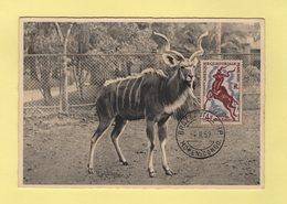 AEF - Carte Maximum - Grand Koudou - Brazzaville Moyen Congo - 4-2-1959 - Lettres & Documents