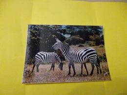 2 Zebres   Photo André Fatras  ' Neuve )  Animaux D'afrique En Liberté - Zebras