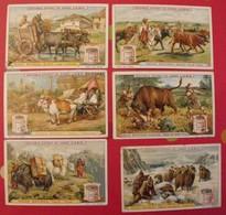 5 Chromo Liebig : Races Bovines . 1897. S 503.  édition Française. + 1 Gratuite - Liebig