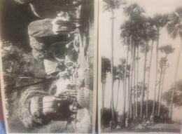 Malesia...PENANG....Two Beautiful Real Photos From Malesya . Ca. 1920/1930? - Malaysia