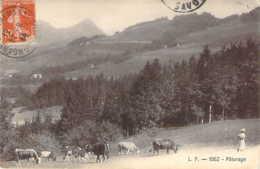 74 Vaches Au Pâturage En Haute SAVOIE - France