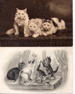 Chats : Lot De 4 Cartes Anciennes - Cats