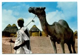 Somalia - Camel - Somalie