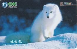 TARJETA TELEFÓNICA DE CHINA. ZORRO POLAR - THE FOX OF NORTH POLE. SDDY-IP-3(2-2). (944). - Tarjetas Telefónicas