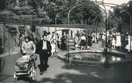 Lille Fauchois 44 Jardin Zoologique état Neuf - Lille