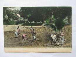 TILLERS  OF  THE  SOIL  ....  ....    TTB - South Africa