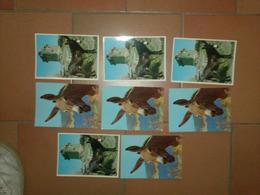 CAB0126 Animaux Lot De 8 Cartes Vierges Anes Corses - 5 - 99 Postcards