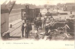 Dépt 14 - CAEN - Débarquement De Bestiaux - (LL N° 13 - Richier Caen) - Débarquement D'une Vache à L'aide D'une Grue - Caen