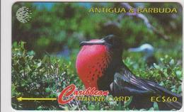 #07 - CARIBBEAN-045 - ANTIGUA - FRIGATE BIRD - Antigua And Barbuda