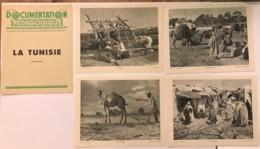 Documentation Pédagogique - La Tunisie - Février 1951 - Fiches Didactiques