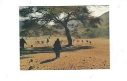 REPUBLIQUE DU NIGER  TROUPEAU DE CHEVRES A TIMIA  DANS L AIR  **** RARE  A   SAISIR **** - Niger