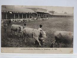 Strassburg. Landwirtschaftliche Ausstellung Zu Strassburg 1913 - Strasbourg