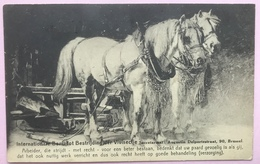 (2917) Witte Paarden - Bestrijding Der Vivisectie - Chevaux