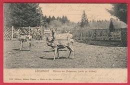 Libramont - Gibiers En Ardennes ... Cerf Et Biches -1907 ( Voir Verso ) - Libramont-Chevigny
