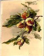 > Illustrateurs - Signés > Klein, Catharina /LOT   3056 - Klein, Catharina