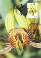 35396. Tarjeta Maxima GLENORCHY (Australia) 2014.Orquidea, ORCHIDEA - Orquideas
