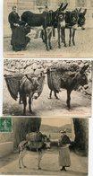 LOT N°3  16  CPA THEME ANES - Postkaarten