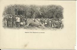 * Capture D'un Eléphant En Annam , CPA ANIMEE - Viêt-Nam