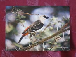 France 1989 Postcard Bird Tisserin Afrique To France - Oiseaux