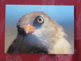 France 1998 Postcard Bird Mesange Monetier To France - Marianne - Oiseaux