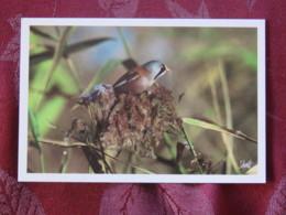 France 2005 Postcard Bird Panure Mesange To France - Oiseaux