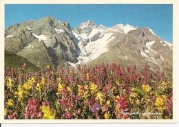73. CPM. Savoie. Maurienne. Rhododendrons Et Massif Montagneux (photo Bernard Grange) - Francia
