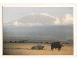 KENYA AMBOSELI ET LE KILIMANDJARO (dil437) - Kenya